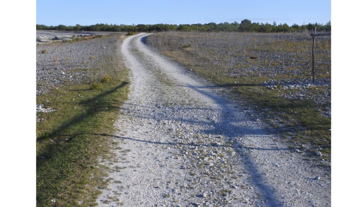 En upptrampad stig blir till en vacker väg.